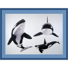 Killer Whale Tribute