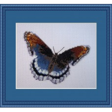 Royal Blue Mariposa